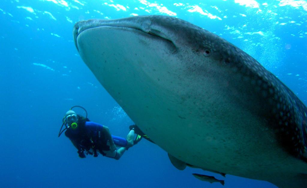 マンタとジンベイザメに出会えるモルディブのユニークな場所