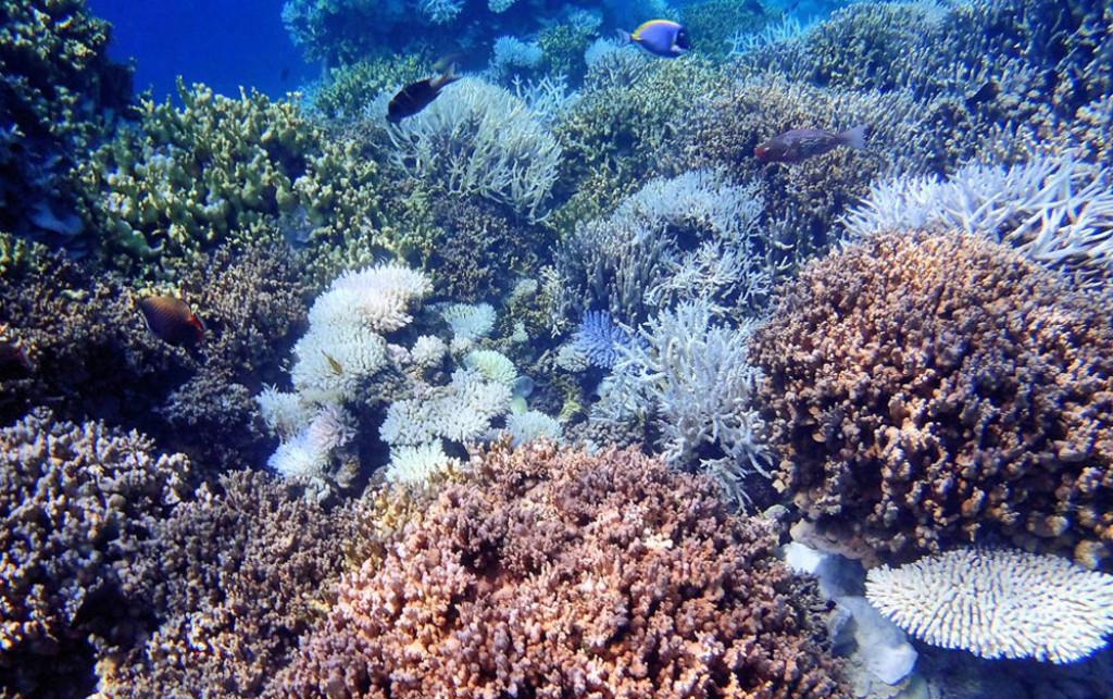 Come sopravviverà l'Arcipelago Tropicale delle Maldive