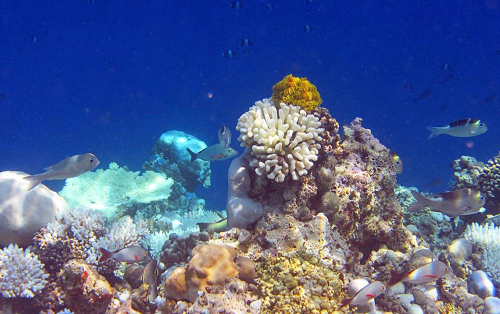Maldives Coral Springs Back to Life