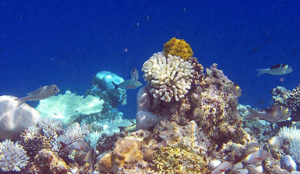 Die Korallenriffe der Malediven erwachen wieder zum Leben