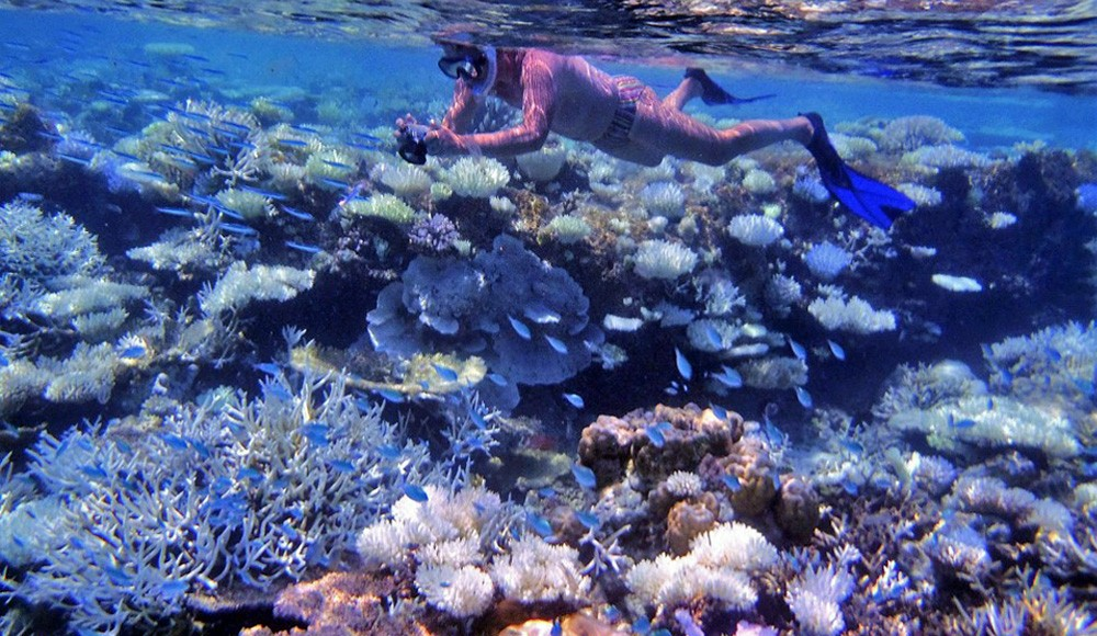 Maldives Tours: Pick of the Best Snorkelling Trips