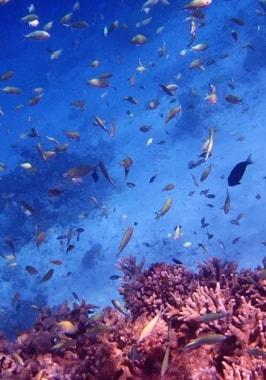 Foto di Esperienza di snorkeling
