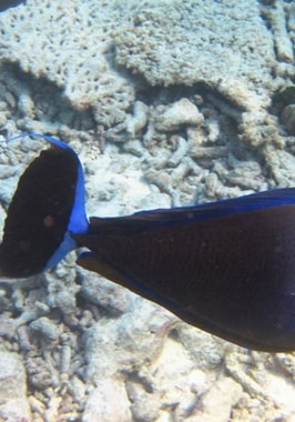 Photo of Snorkelling Experience