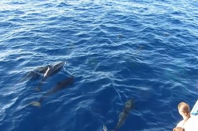 viaggio tra i delfini
