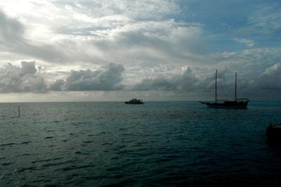 Delphin Tour im Meeru Island Resort
